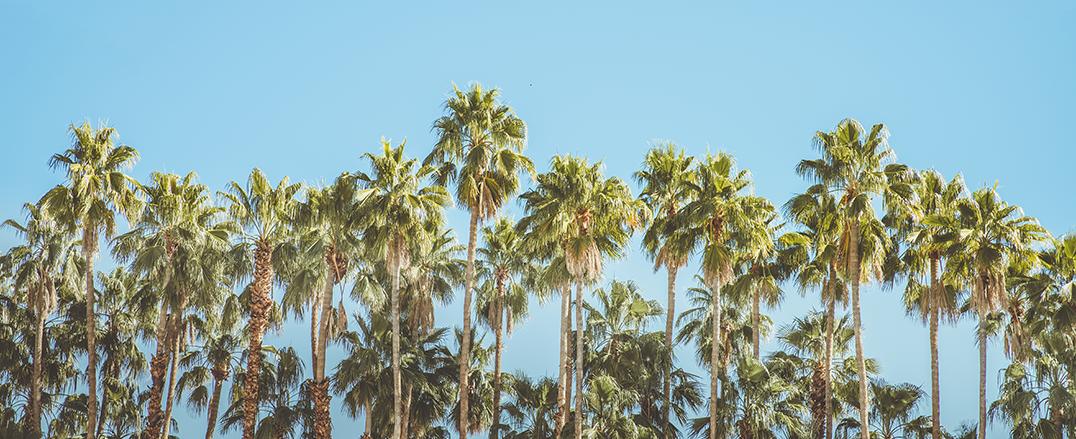 PalmTrees.png